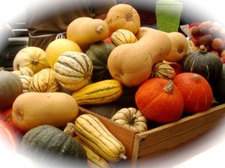 winter squashes - zucche