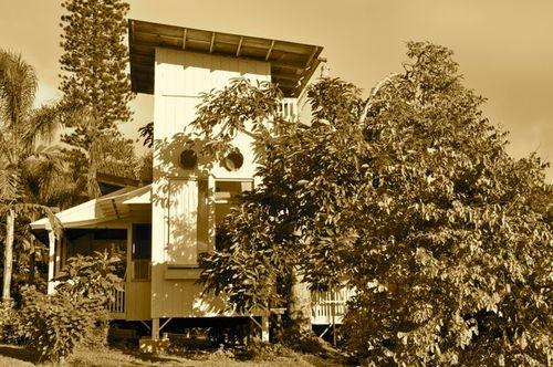 the Avocado Tree House