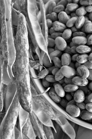 borlotti / cranberry beans