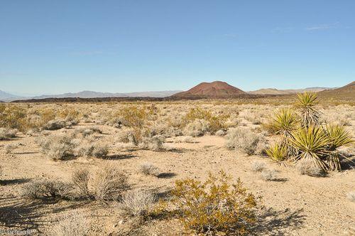 Mojave Desert National Preserve