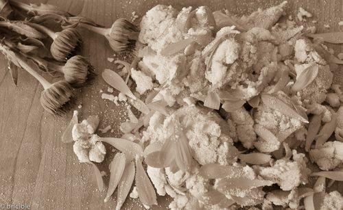 pasta dough with calendula petals