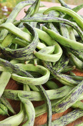 Rattlesnake beans