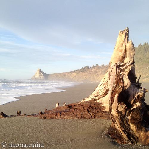 IMG_2224 / Dry Lagoon Beach, CA