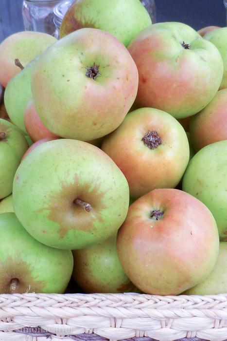 mutsu apples / P1020824