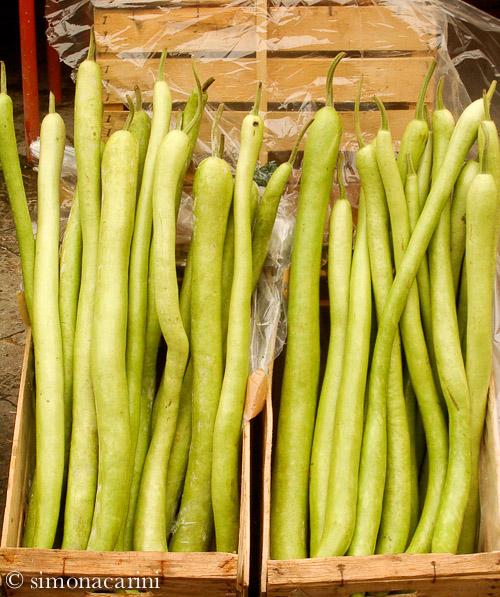 zucchina lunga / IMGP4164