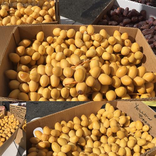 fresh Yellow Barhi dates / IMG_2599