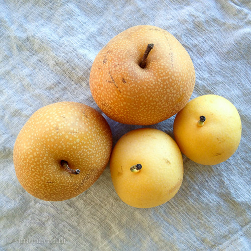 Asian pears / IMG_3783